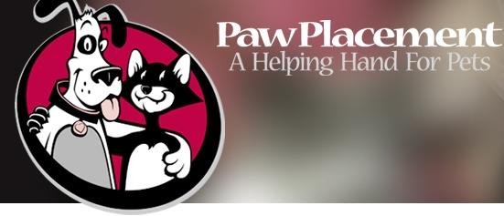 My Pet Cat Spoosie Findlay Toyota Flagstaff News